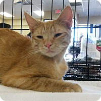Adopt A Pet :: Big Red - Berkeley Hts, NJ