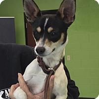Adopt A Pet :: Jeter - Nashville, TN