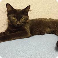 Adopt A Pet :: Wendy - Chandler, AZ