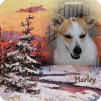 Terrier (Unknown Type, Medium)/Terrier (Unknown Type, Medium) Mix Dog for adoption in Crowley, Louisiana - Harley