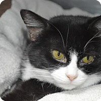 Adopt A Pet :: Audrey - Monroe, MI