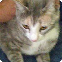 Adopt A Pet :: April - Wayne, NJ