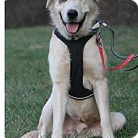 Adopt A Pet :: Speedy - Enfield, CT