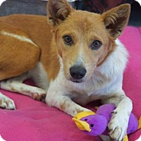 Adopt A Pet :: 'ENYA' - Agoura Hills, CA