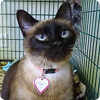 Adopt A Pet :: Cleo - Washougal, WA