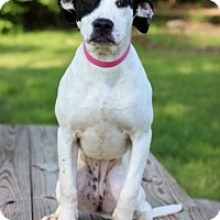 Adopt A Pet :: Lila - Waldorf, MD
