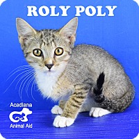 Adopt A Pet :: Roly Poly - Carencro, LA