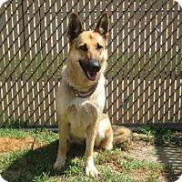 Adopt A Pet :: *BRIDGETTE - Norco, CA