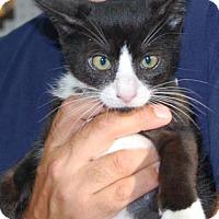 Adopt A Pet :: Vincent - Brooklyn, NY
