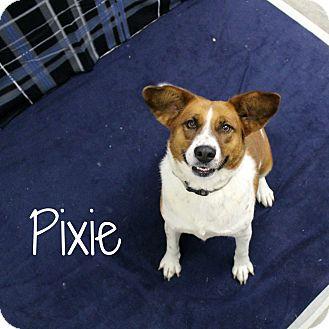 Beagle Mix Dog for adoption in Melbourne, Kentucky - Pixie
