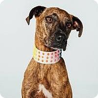 Adopt A Pet :: Savannah - Houston, TX