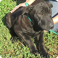 Adopt A Pet :: Trixie - Reeds Spring, MO