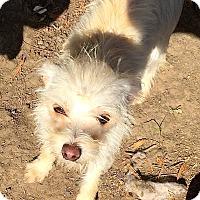 Adopt A Pet :: Samantha - Normal, IL