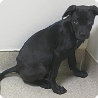 Adopt A Pet :: Josie - Gary, IN