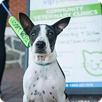 Adopt A Pet :: Daisy - North Haledon, NJ