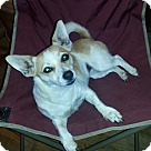 Adopt A Pet :: Janie