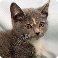 Adopt A Pet :: Nora - Greenfield, IN