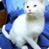 Adopt A Pet :: Opus - Youngsville, NC