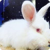 Adopt A Pet :: Gloria - Foster, RI