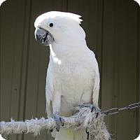 Adopt A Pet :: Buddy - Elizabeth, CO
