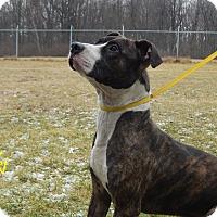 Adopt A Pet :: Loki - Bucyrus, OH