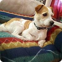 Adopt A Pet :: CHARLIE - Peterborough, ON