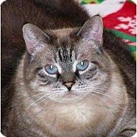 Adopt A Pet :: Gravy Boat - Winder, GA