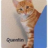 Adopt A Pet :: QUENTIN - AUSTIN, TX