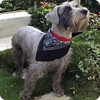 Adopt A Pet :: Truffles - Long Beach, CA