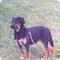 Adopt A Pet :: Charlie - Andrew, IA
