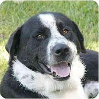 Adopt A Pet :: Fredo - Mocksville, NC