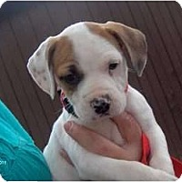 Adopt A Pet :: Mayla - Clayton, OH