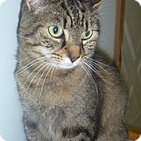 Adopt A Pet :: Buster Brown - Hamburg, NY