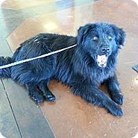 Adopt A Pet :: Cameron - Russellville, KY