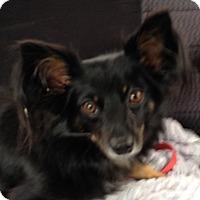 Adopt A Pet :: Cody - Orlando, FL