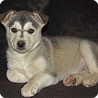 Adopt A Pet :: Tweedle - Phoenix, AZ