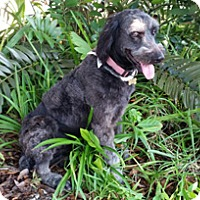 Adopt A Pet :: CHELSIE - Melbourne, FL