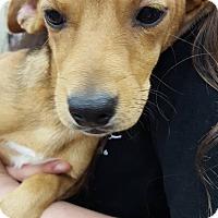 Adopt A Pet :: Olive - Fresno, CA