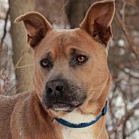 Adopt A Pet :: Husky - Port Washington, NY
