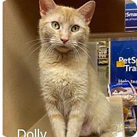 Adopt A Pet :: Dolly - Danielsville, GA
