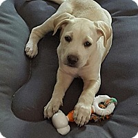 Adopt A Pet :: Lil Bit - Windermere, FL
