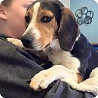 Beagle Mix Dog for adoption in Alpharetta, Georgia - Allene