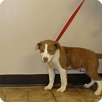 Adopt A Pet :: Addie - Oviedo, FL