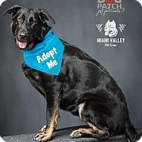 Adopt A Pet :: Bardot - Dayton, OH