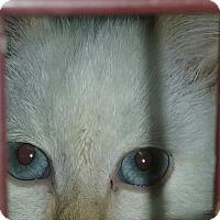Adopt A Pet :: LA-red - Devon, PA