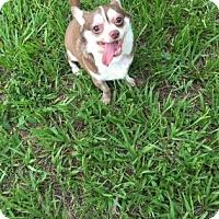 Adopt A Pet :: Leonard - Bradenton, FL