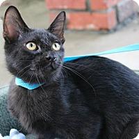 Adopt A Pet :: Oyster - Ocean Springs, MS