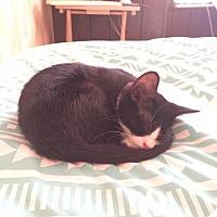 Adopt A Pet :: Hilda - Philadelphia, PA