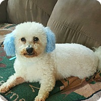 Adopt A Pet :: Blue - Mount Gilead, OH