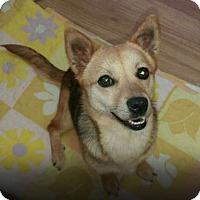 Adopt A Pet :: Berry - Oakton, VA